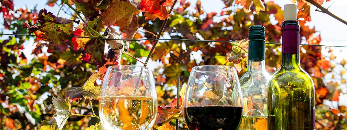 Se radi sprostite ob dobrem kozarcu vina?